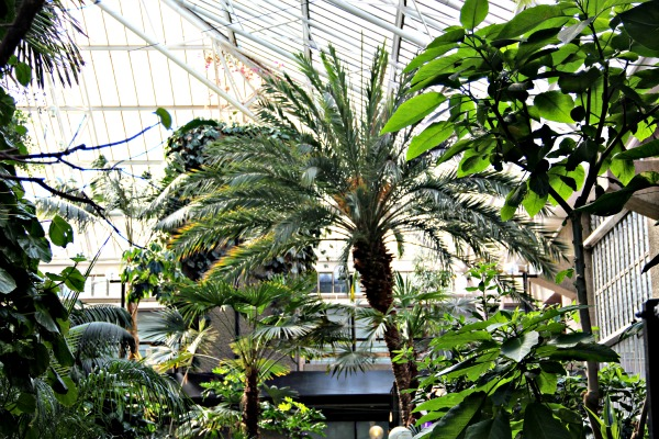 Barbican conservatory, green London, green, London, Barbican, conservatory, free, kids friendly