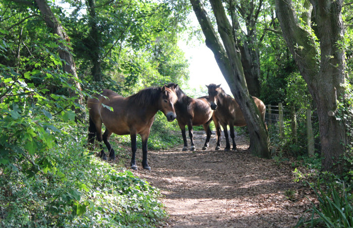st margaret's bay kent walking along the cliff horses