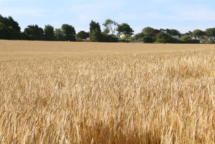 st margaret's at cliff kent wheat