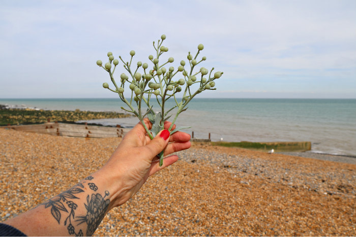 st margaret's bay kent foraging with the wild kitchen 15