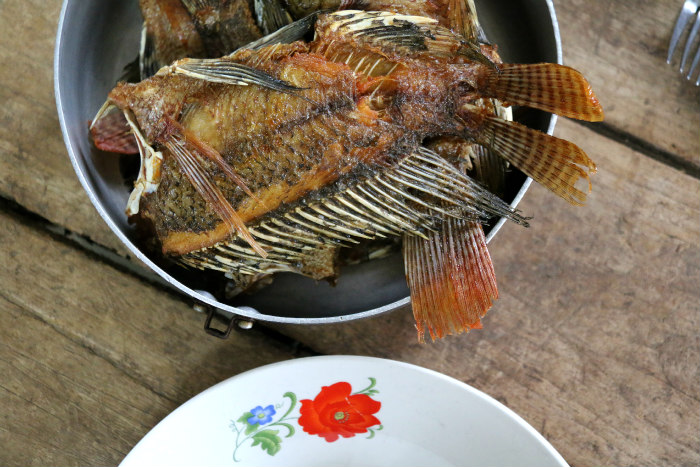 Cuba Vinales grilled fish lunch airbnb experience