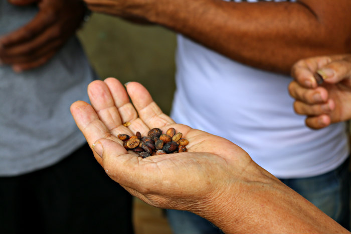 Cuba Vinales coffee beans airbnb experience