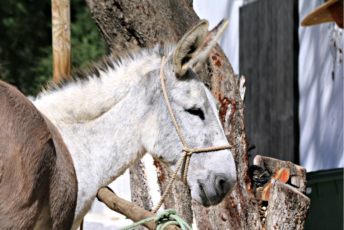 Andalusia Vejer de la Frontera Spain donkey