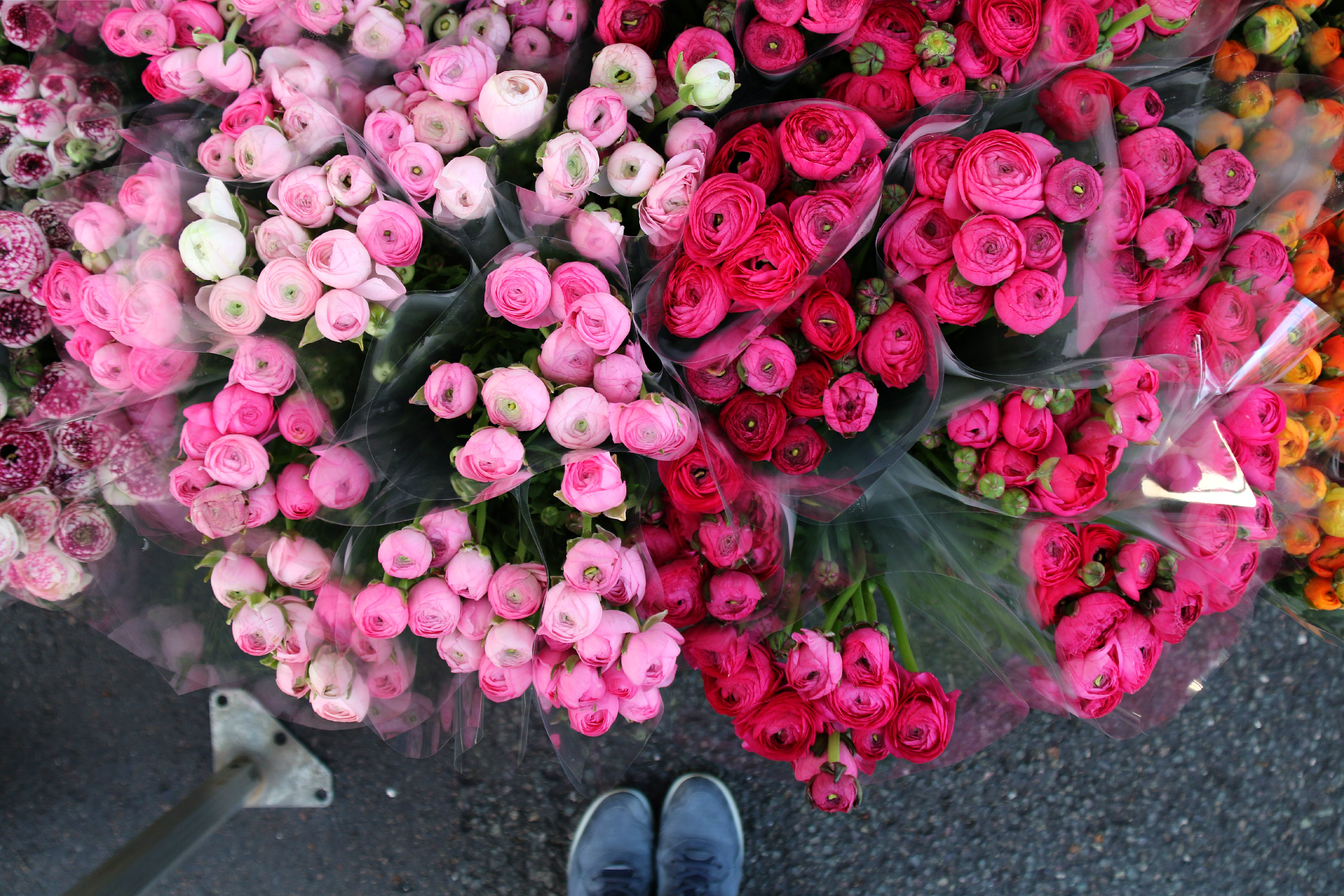 Columbia Road Flower Market London ranunculus