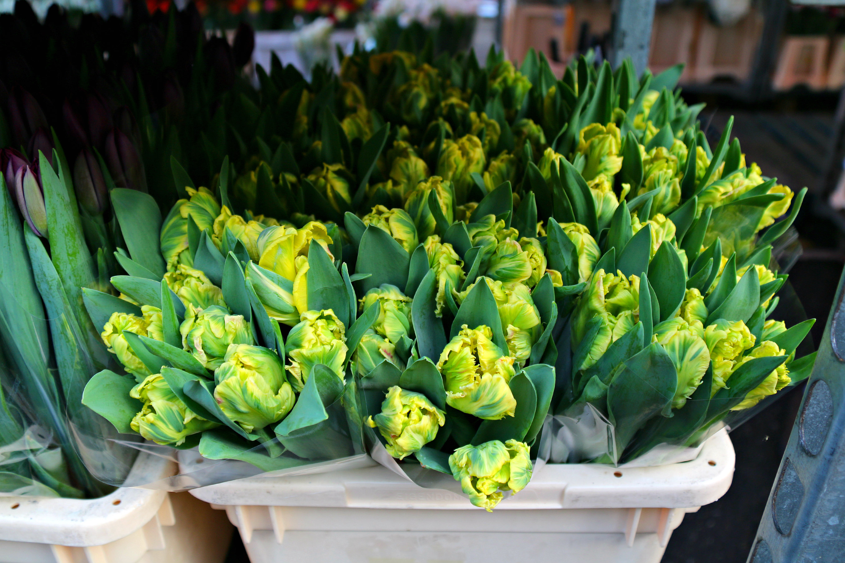 Columbia Road Flower Market London tulips