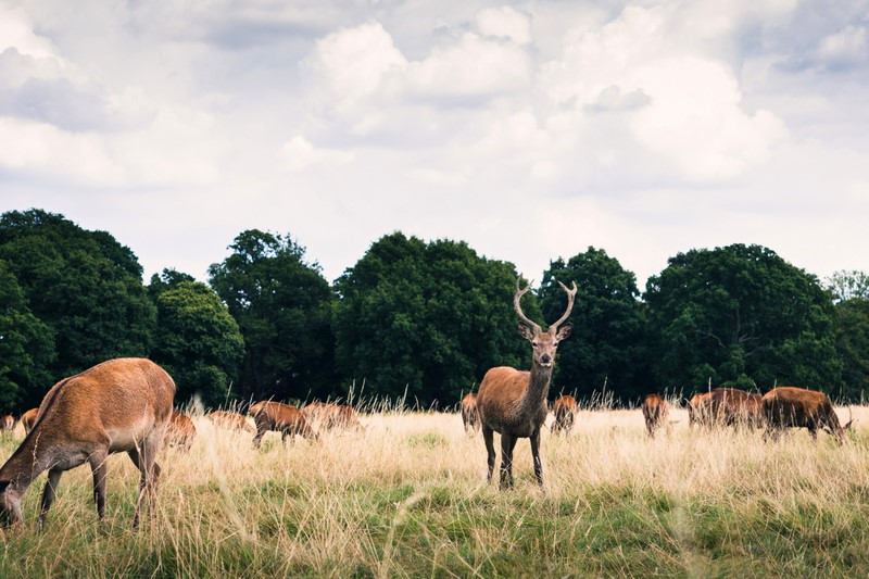 cycling in London richmond park