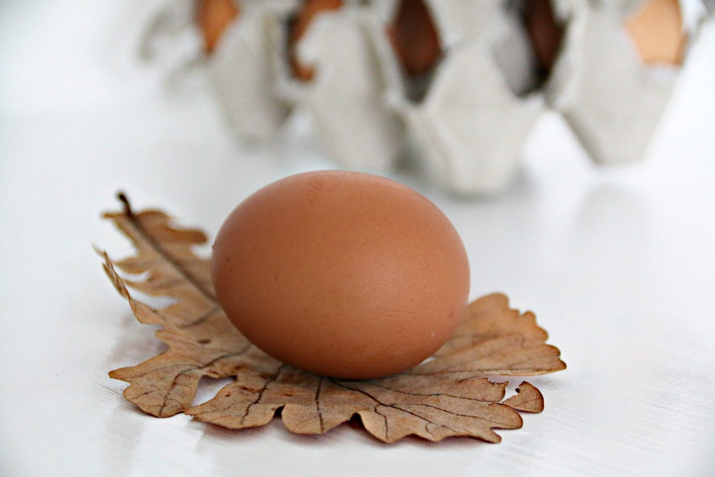 beautiful farm egg