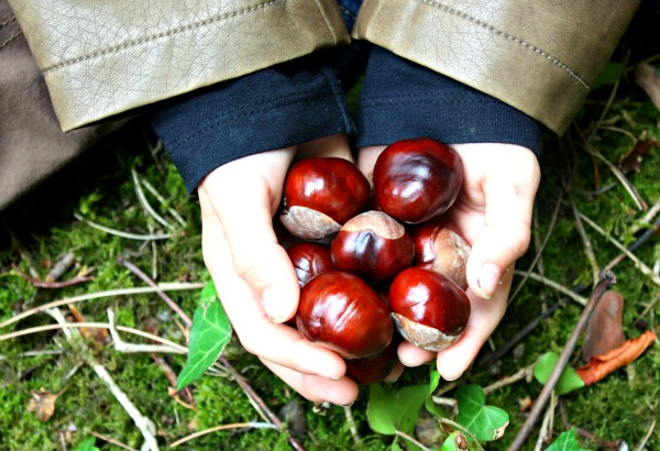 Embrace autumn - handful of conkers
